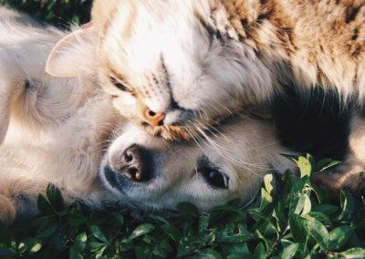 pes_a_kočka